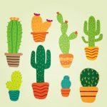 cuidados para los cactus