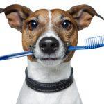 cuidado dental de tu perro
